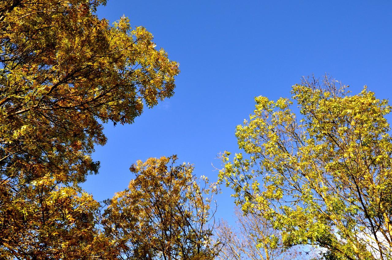 Automne en Charente - Novembre 2012
