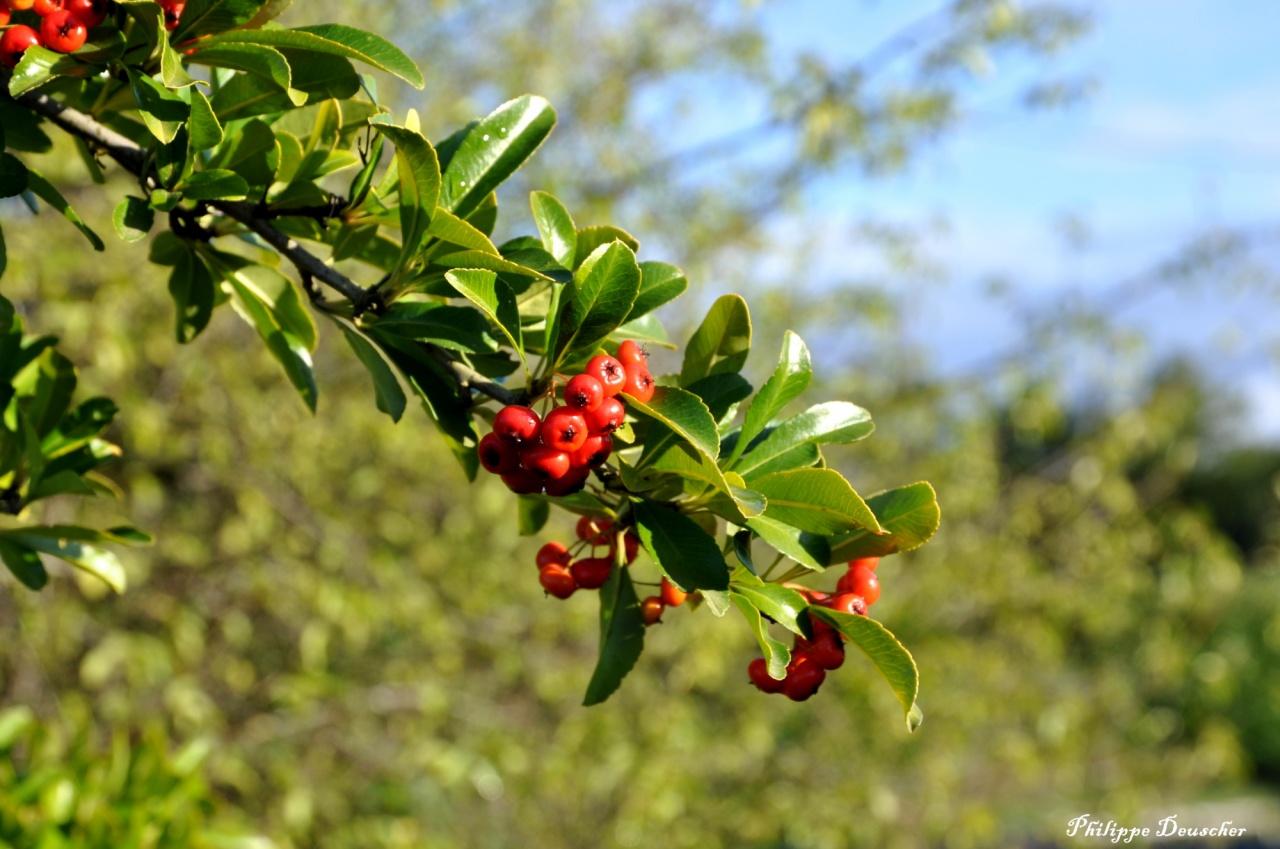 Végétation en Charente - Octobre 2010