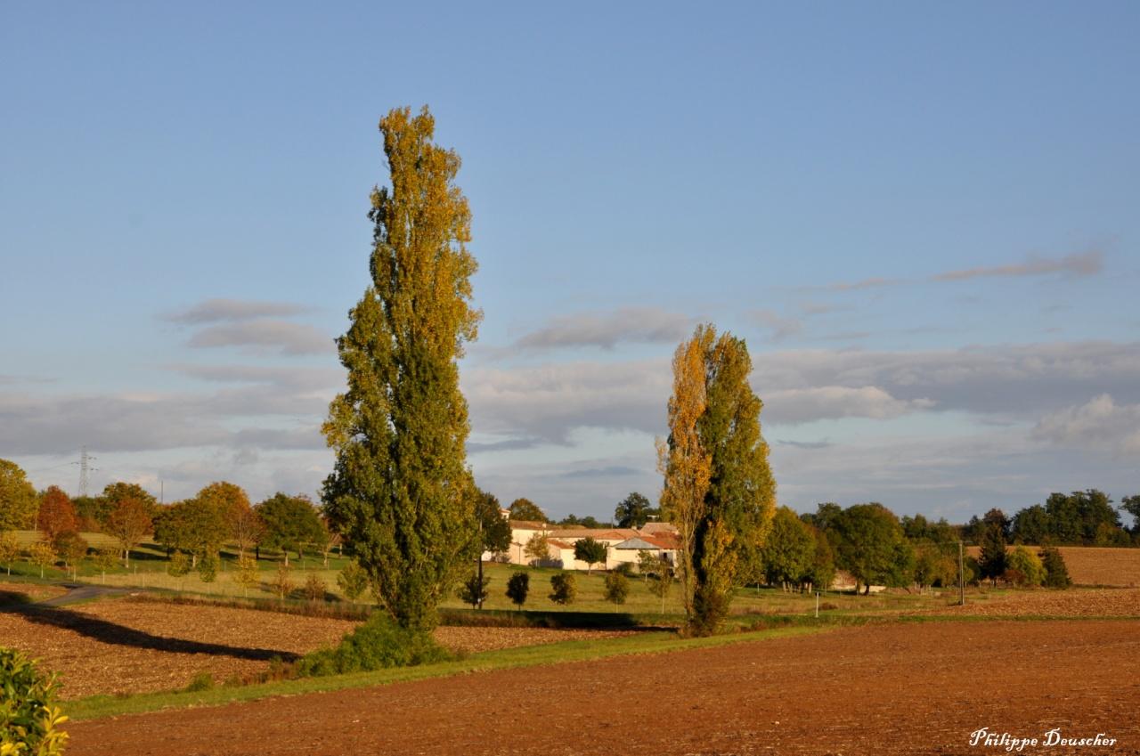 Paysage en Charente au sud d'Angoulême - Octobre 2010