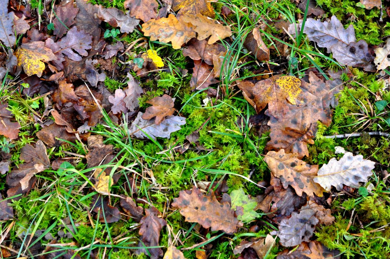 Sous bois en Charente - Novembre 2012
