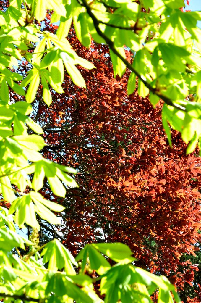 Végétation printanière à Montignac - Charente - Avril 2013