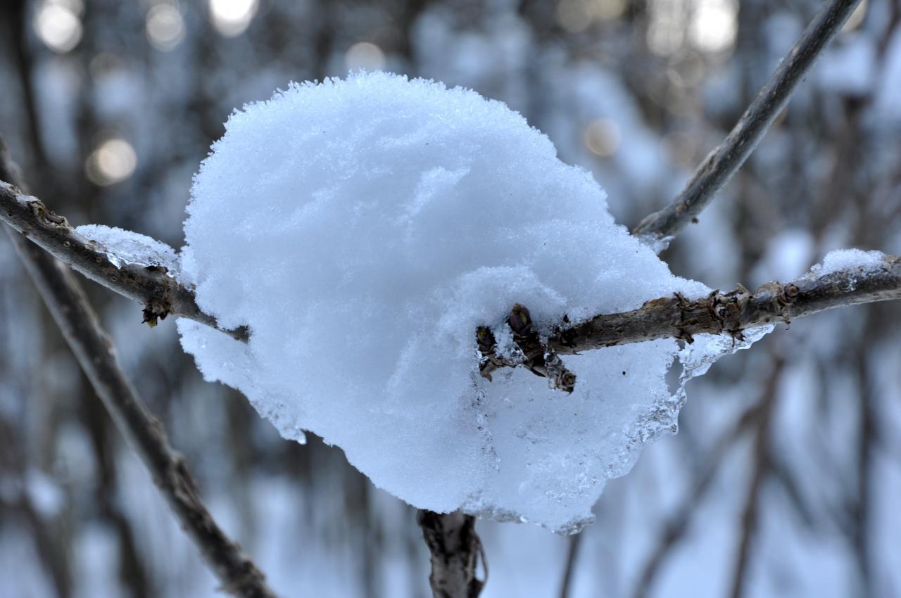Végétation en hiver à Charquemont - Doubs - Février 2013