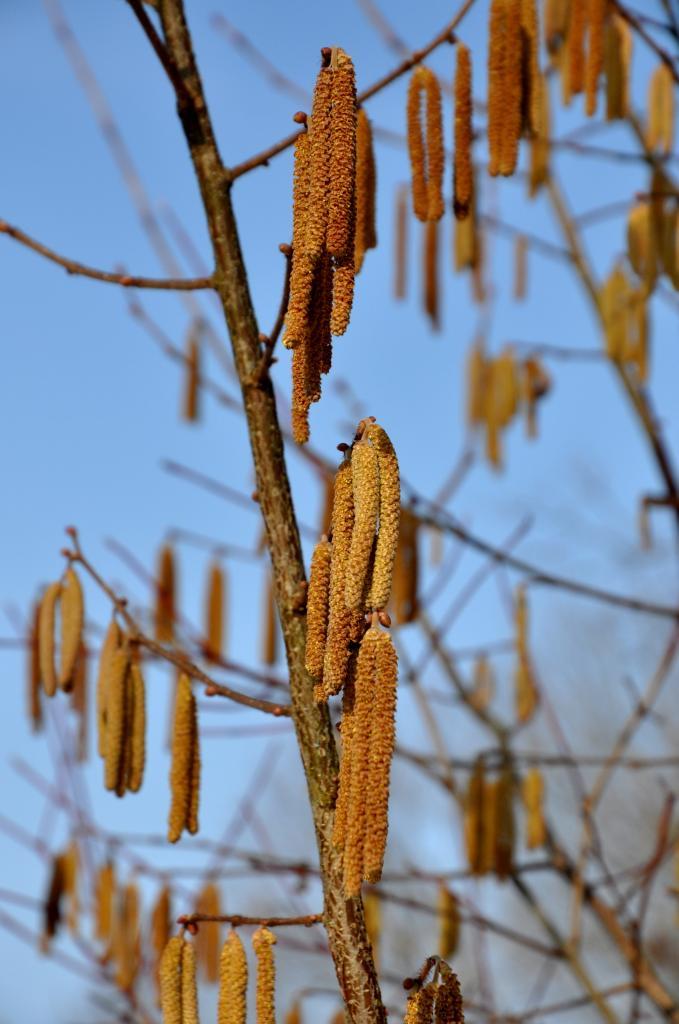 Végétation en hiver à Mathay - Doubs - Février 2013