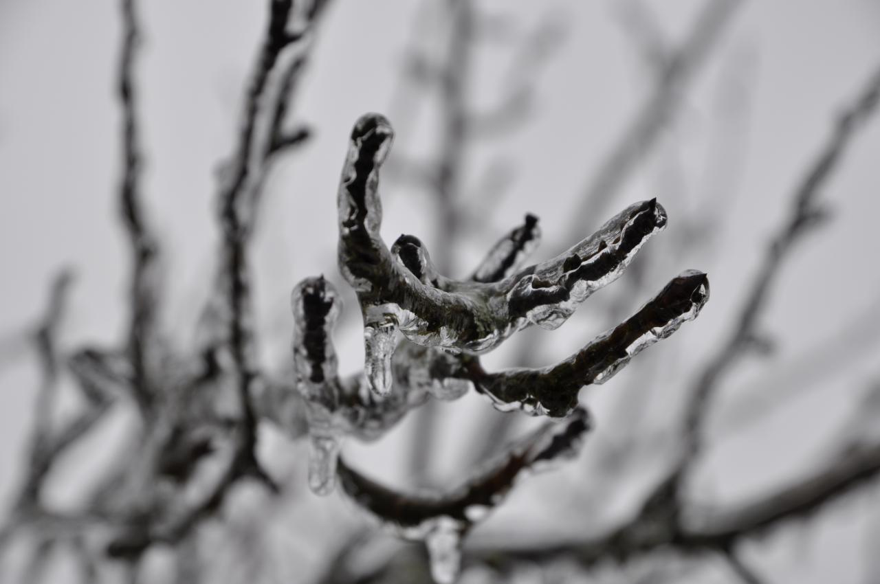 Nature figée - Mathay - Doubs - Janvier 2013
