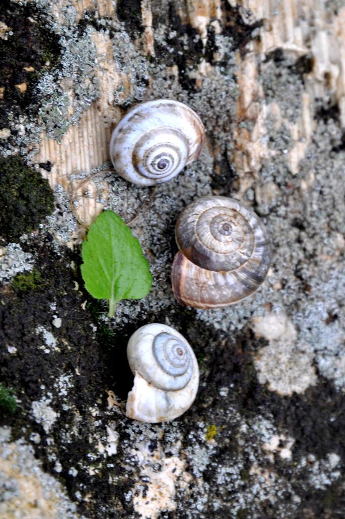 Escargots en Charente - Novembre 2012