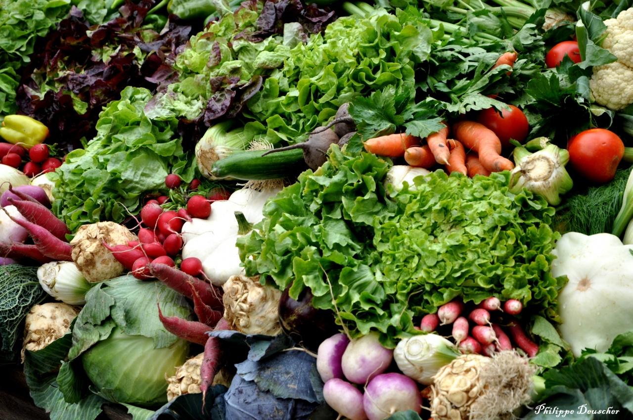 Foire aux légumes à Colmar - Haut Rhin - Septembre 2010