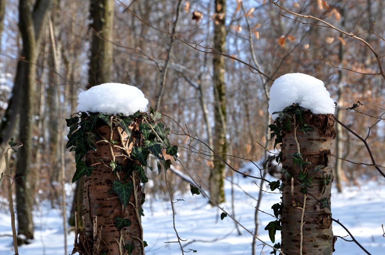 Forêt communale de Mathay - Doubs - Février 2013
