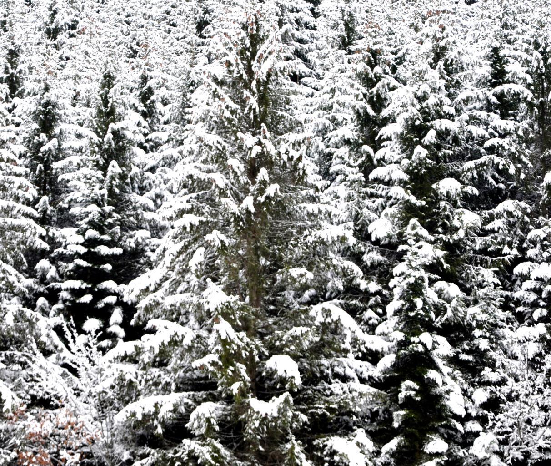Forêt de Pierrefontaine-Les-Blamont - Doubs - Janvier 2016