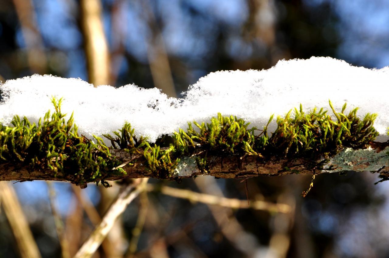 Hiver dans la forêt de Mathay - Doubs - Février 2013