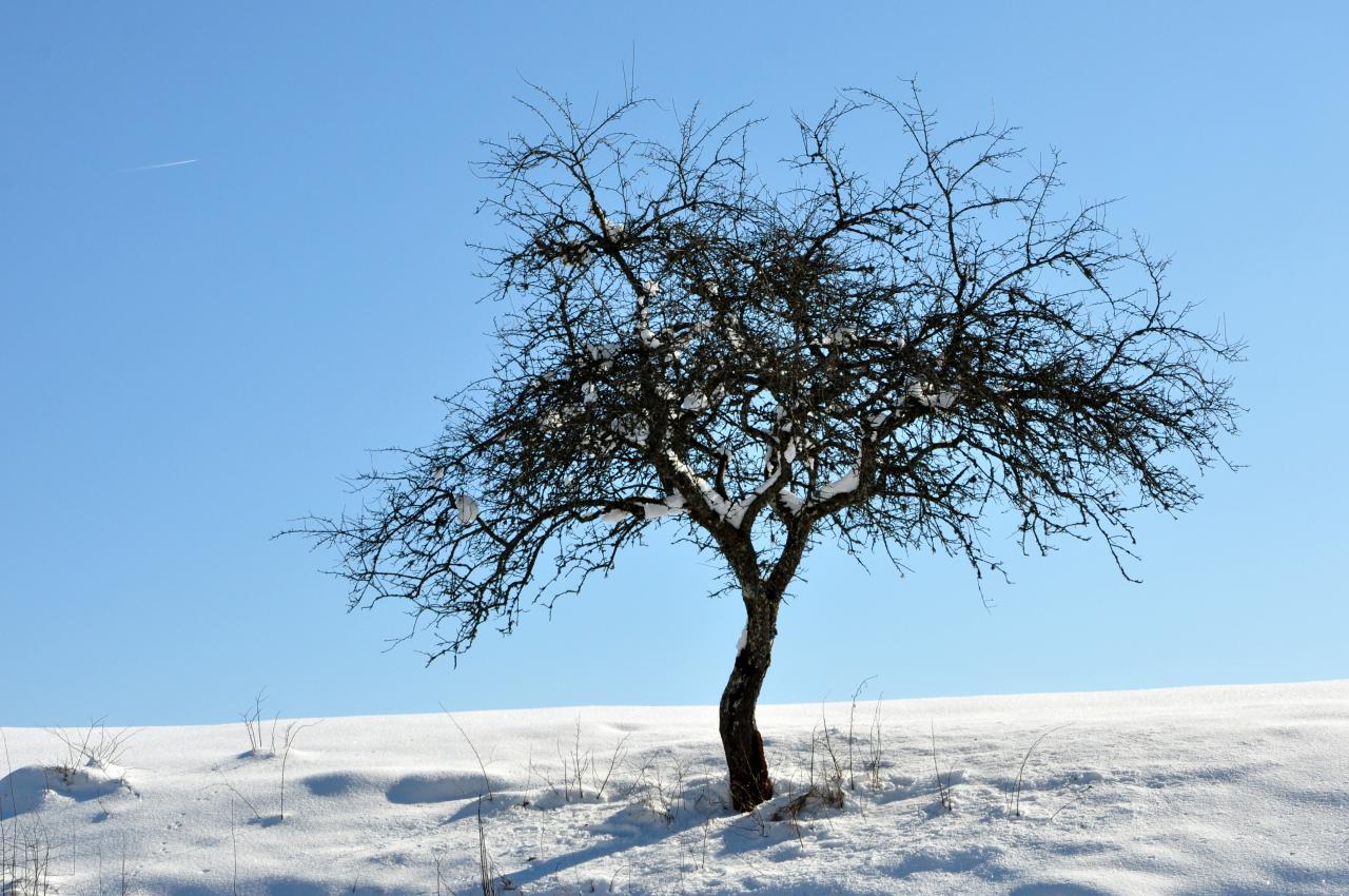 Arbre en hiver à Charquemont - Doubs - Février 2013