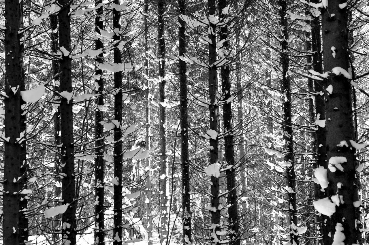 Sous bois à Charquemont - Doubs - Février 2013