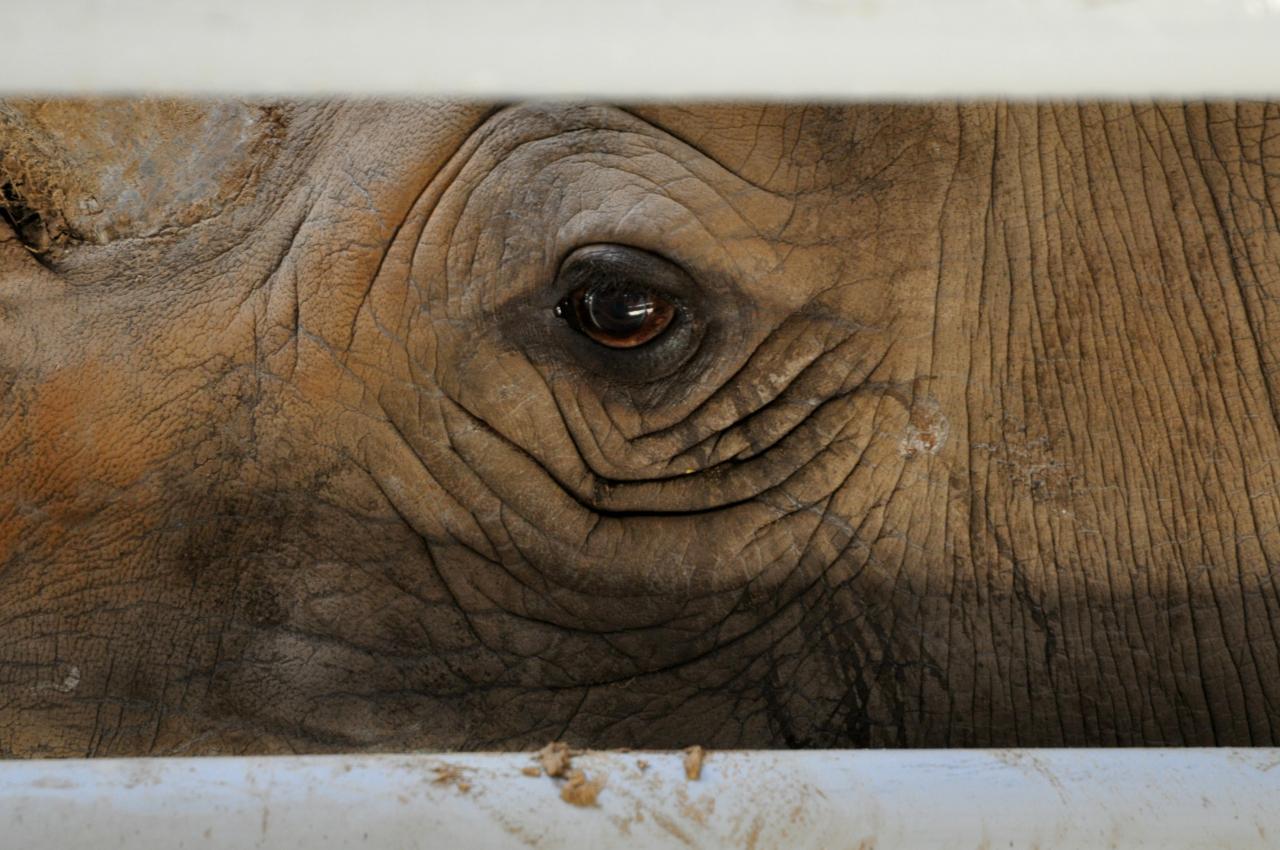 Rhinocéros au zoo de la Palmyre - Octobre 2012