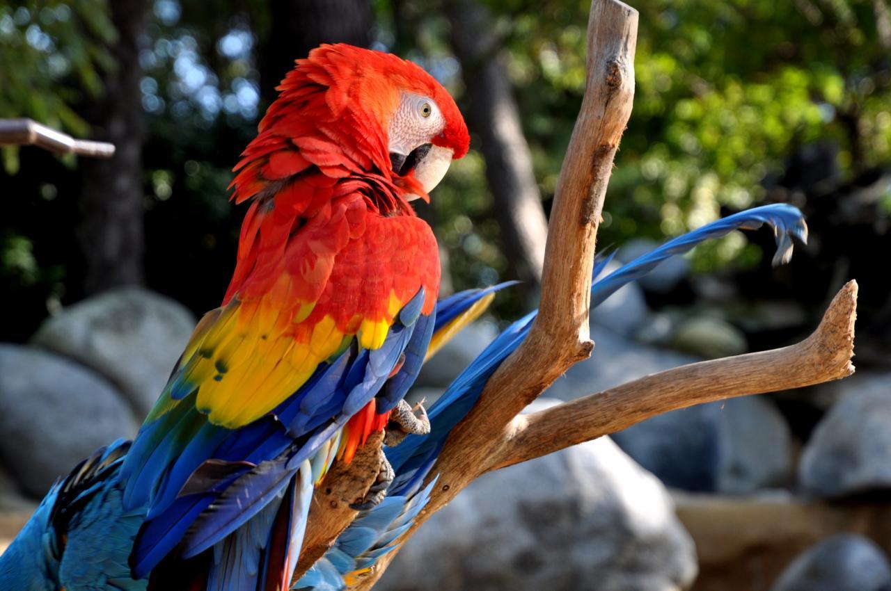 Ara au zoo de La Palmyre - Charente maritime - Octobre 2012