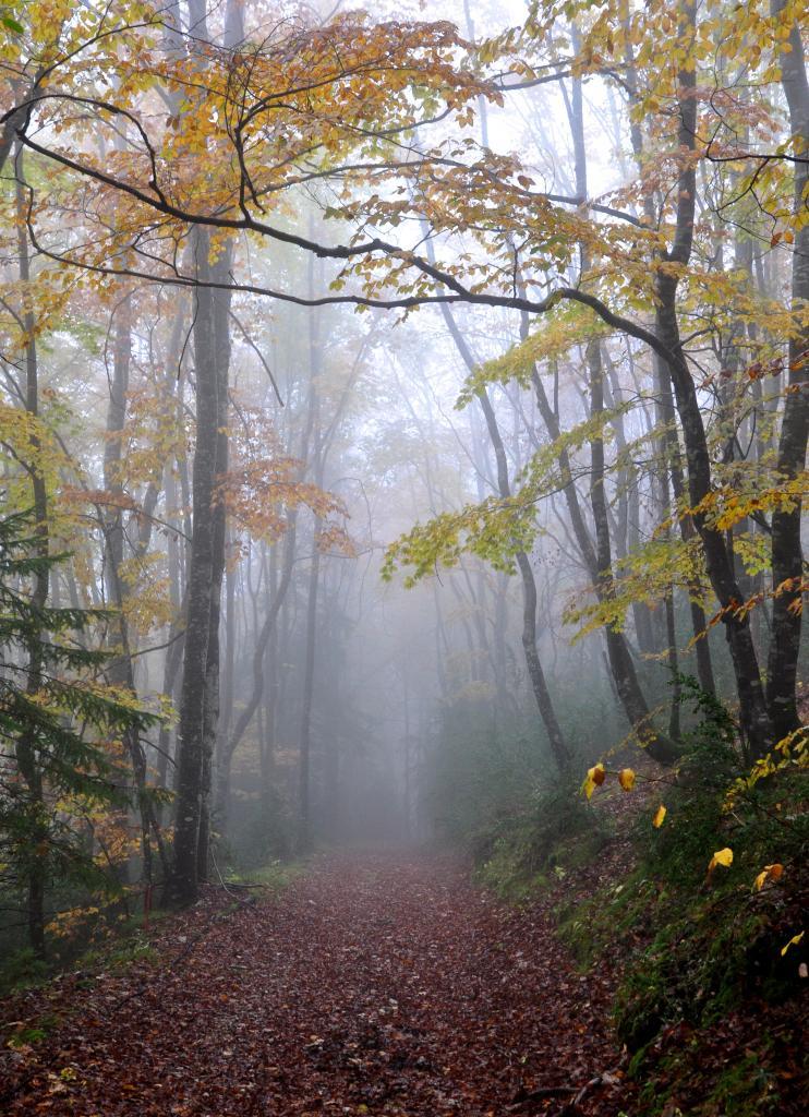 Forêt de Cinquetral - Jura - Octobre 2016