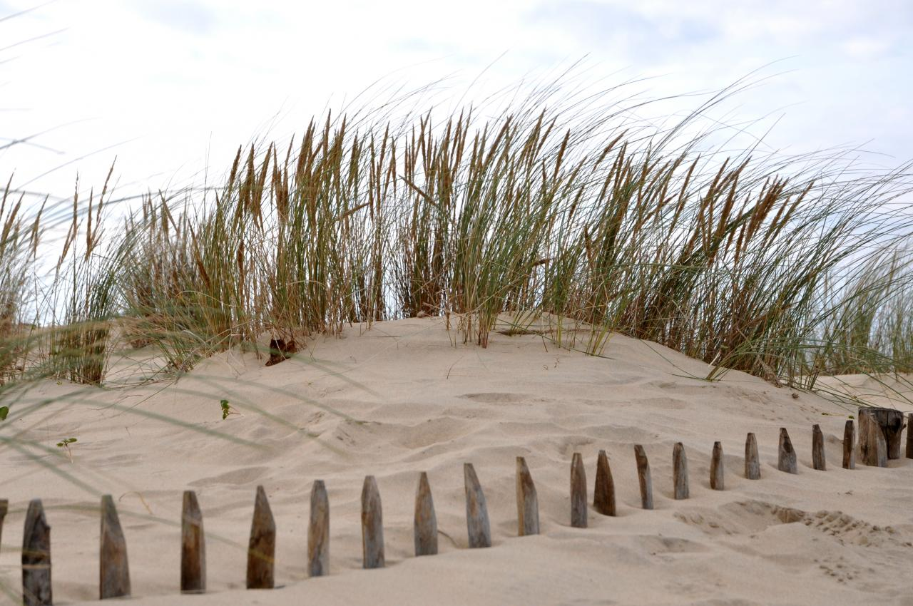 Dune en Charente maritime - Octobre 2012