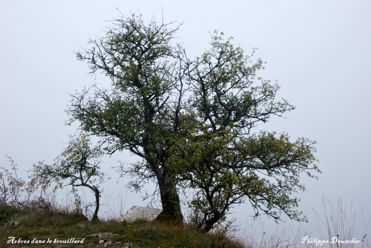 Arbres dans la brume - Côte d'Or - Octobre 2009
