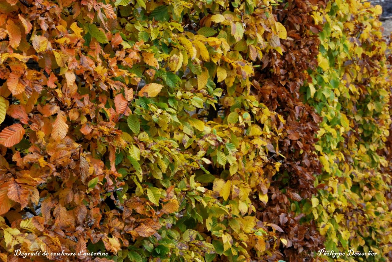 Dégradé de couleurs d'automne en Bourgogne - Côte d'Or - Octobre 2009