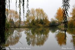 Reflets sur un étang à Sainte Marie La Blanche - Côte d'Or - Octobre 2009