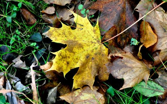 Feuilles d'automne à Mathay - Doubs - Octobre 2013