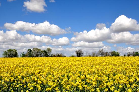 Ciel aux environs de Mansle - Charente - Avril 2012