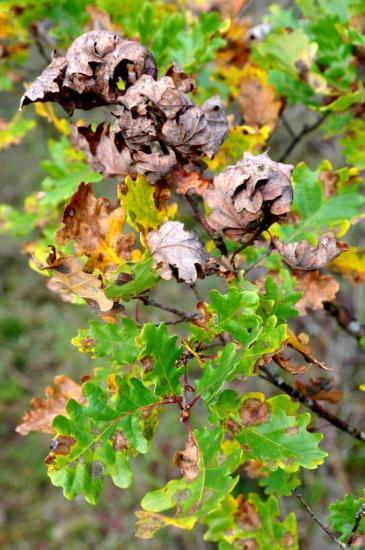 Sous-bois en Charente - Octobre 2012