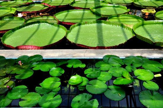 Jardins de la villa Taranto à Verbania - Italie - Piémont - Août 2012