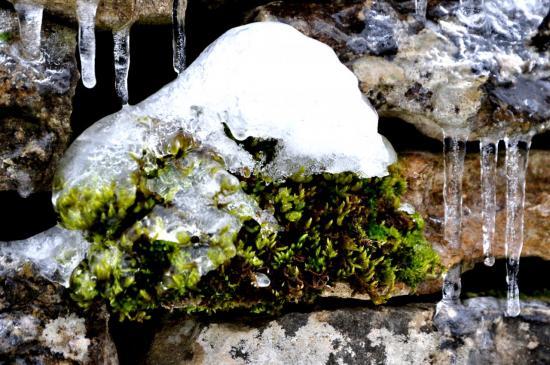 Quand la nature se fige - Mathay - Doubs - Janvier 2013