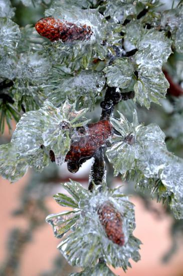 Végétation figée à Mathay - Doubs - Janvier 2013