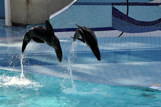 Otaries au zoo de La Palmyre - Charente maritime - Octobre 2012