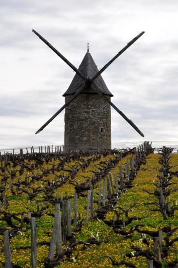 Moulin de Blaignan - Gironde - Avril 2013