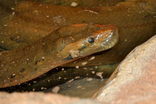 Serpent au zoo de La Palmyre - Charente maritime - Octobre 2012