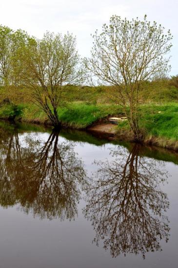 Reflets au coeur du vignoble bordelais - Gironde - Avril 2013