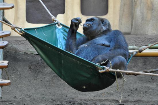 Singe au zoo de La Palmyre - Charente maritime - Octobre 2012