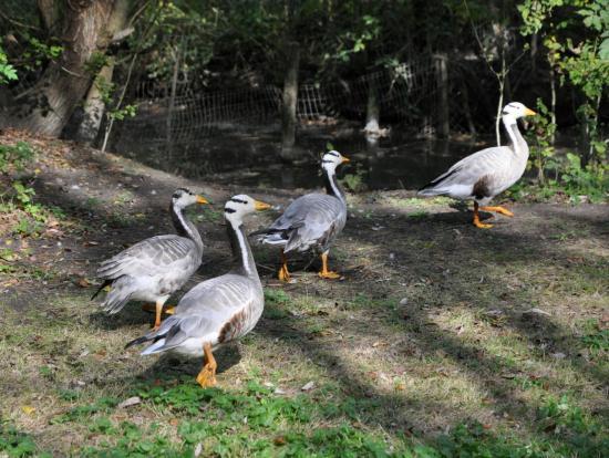 Parc ornithologique de Saint Hilaire La Palud - Deux-Sèvres - Octobre 2013