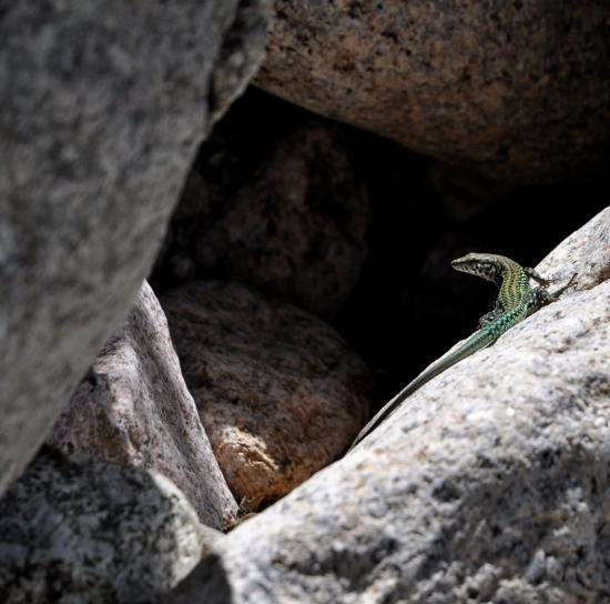 Gorges de la Spelunca - Corse du sud - Août 2014