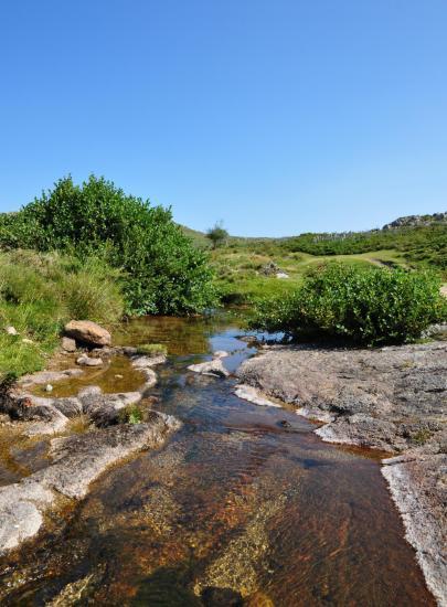 Le plateau du Coscione - Alta Rocca - Corse du sud - Août 2014