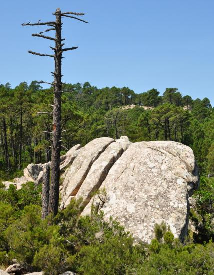Corse du sud - Août 2014