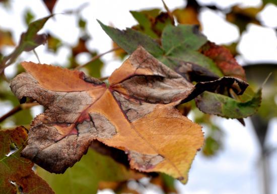 Automne à Mathay - Doubs - Octobre 2014