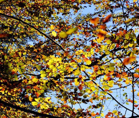 Les échelles de la mort - Charquemont - Doubs - Octobre 2014