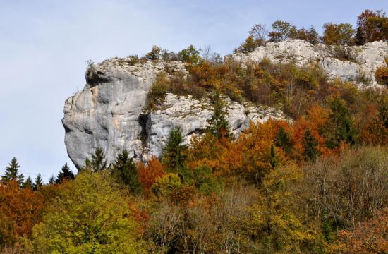 Tête de singe - Frontière franco-suisse - Octobre 2015