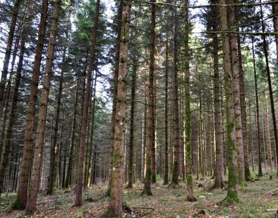 Forêt du Mémont - Doubs - Novembre 2015