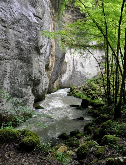 Source du Pontet - Doubs - Mai 2016