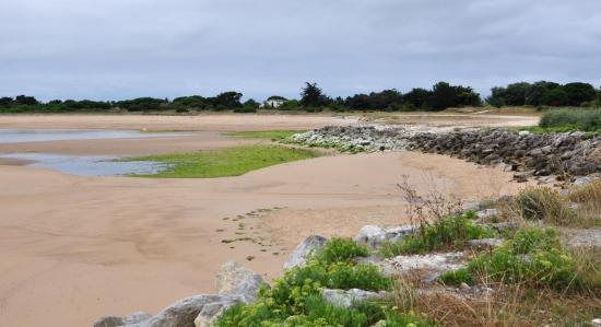 Ile d'Oléron - Charente maritime - Juillet 2016