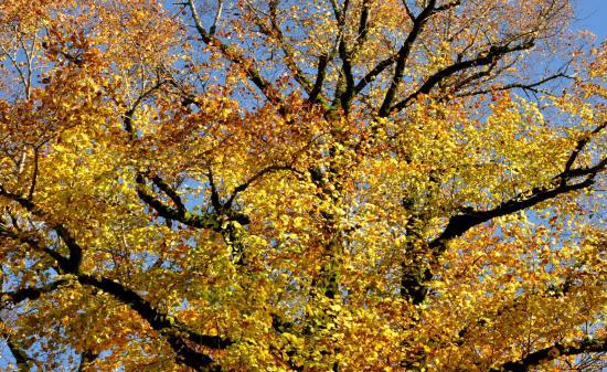 Nozeroy - Jura - Octobre 2016