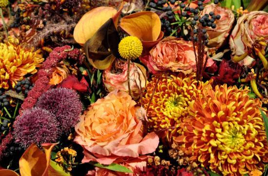 Folie flore - Parc des expositions de Mulhouse - Octobre 2017