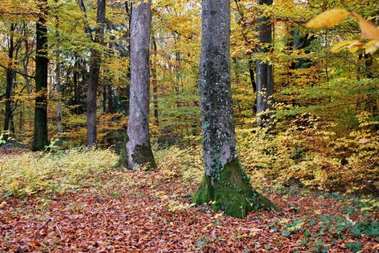 Sous-bois à Mathay - Doubs - Octobre 2009