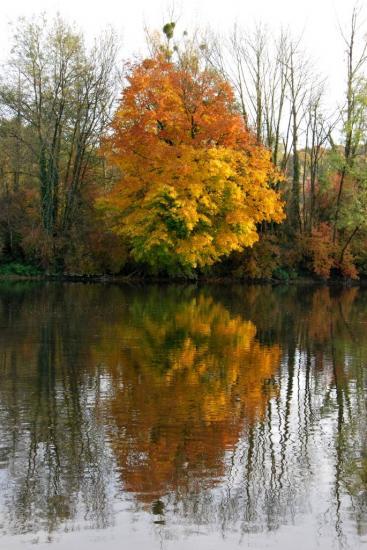 Reflet d'arbre sur le Doubs à Bavans - Doubs - Octobre 2009