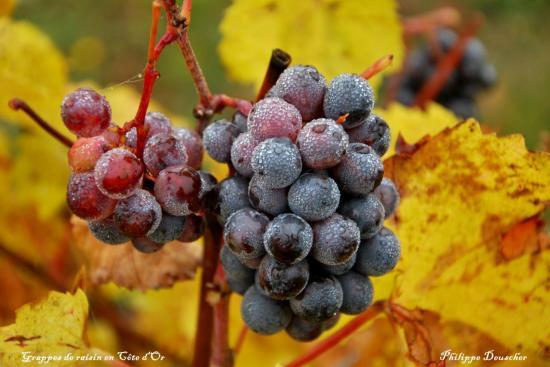 Vignoble en Côte d'Or - Octobre 2009